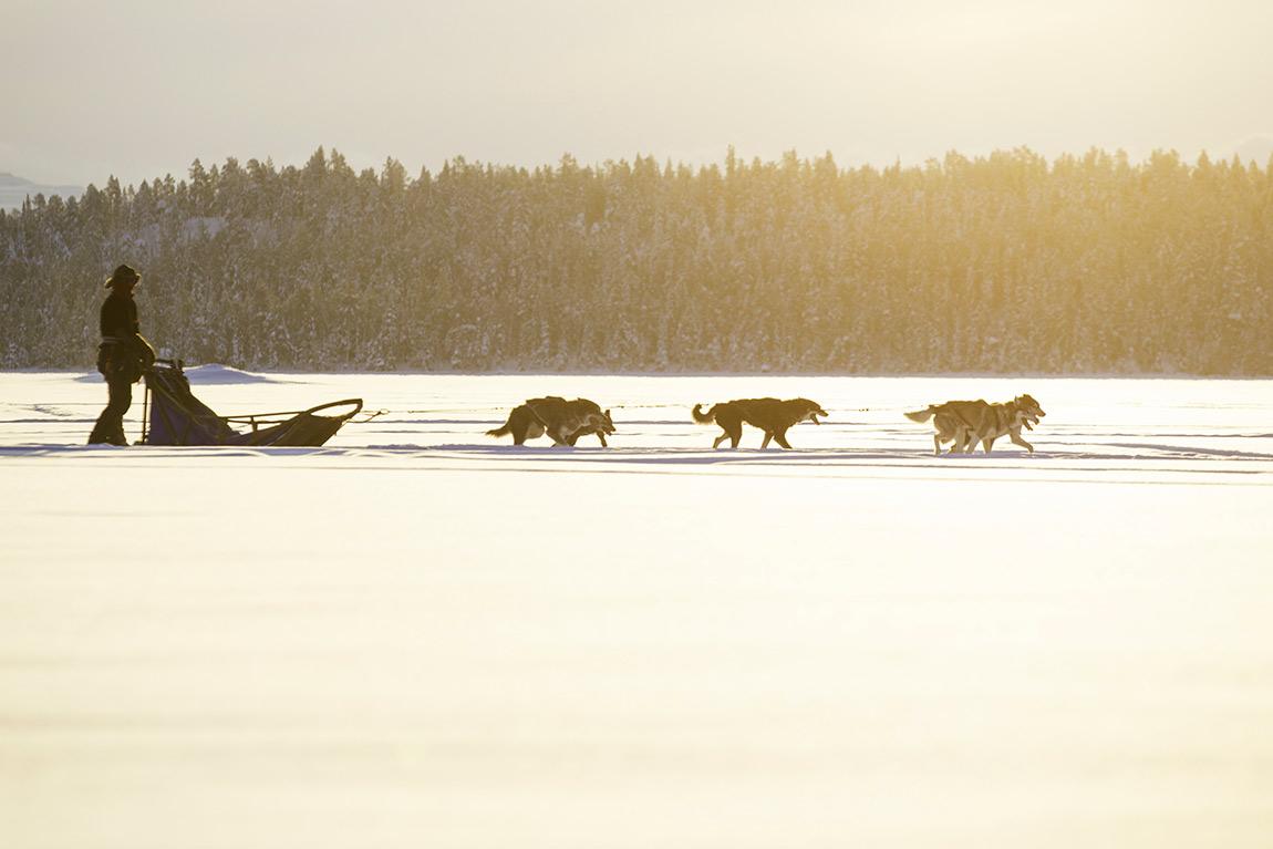Active Lapland sled dog trips in Kiruna